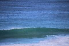 IMG_3674 (gervo1865_2 - LJ Gervasoni) Tags: surfing with whales lady bay warrnambool victoria 2017 ocean sea water waves coast coastal marine wildlife sealife blue photographerljgervasoni