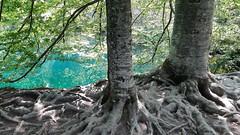 20180818_113516 (rmassart) Tags: m08 y2018 croatia plitvicka jezera plitvickajezera plitvichka lakes