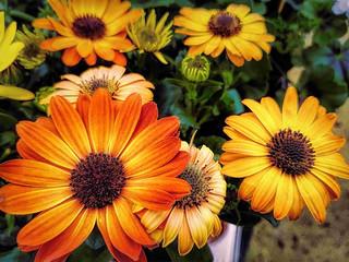 Humble flowers