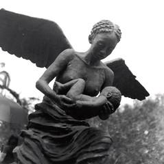 Statue of Angel (bongo najja) Tags: plantation whitney s pro c330 mamiya fp4 ilford