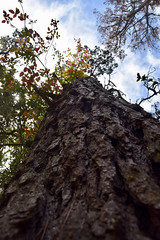 Tree (nick.amoscato) Tags: ca california pointlobos lobos reserve bigsur