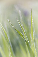Dream a little dream... (chris.ph) Tags: water dew macro morning green grass leaves project52 ef100mmf28lmacroisusm canon6d