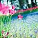 常陸海濱四月之花