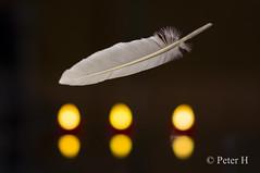 Flickr Friday: #Hover (Peter H. Photographie) Tags: flickrfriday hover flotter flutuar 徘徊 schweben flotar samyang 85mm14 manualfocus sony a580