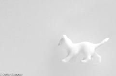 Snow Cat [explored] (Peter Branger) Tags: smileonsaturday whiteonwhite cat macro canoneos7dmarkii canonef100mmf28lisusm