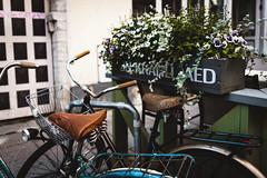 *** (donnicky) Tags: tallin basket bicycle city closeup daylight dof flowers nopeople old oldfashioned outdoor plant pottedplant publicsec seat summer transportation travel tallinn harjumaakond estonia ee d850