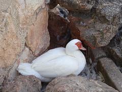ave en Parque Alces Alcazar de San Juan Ciudad Real (Rafael Gomez - http://micamara.es) Tags: ave en parque alces alcazar de san juan ciudad real