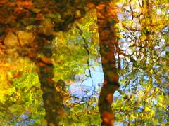 Impressionismus meets Pointillismus (1elf12) Tags: harz winterberg radau hanggraben wald forest germany deutschland reflection spiegelung abstrakt smileonsaturday natureisanartist wasser water