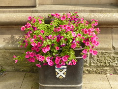 P1090803 - 2018-08-25 - Town - Hexham - Flower Tub (GeordieMac Pics) Tags: ©2018georgemcvitieallrightsreserved northumberland hexham dmc panasonic lumix fz200 geordiemac