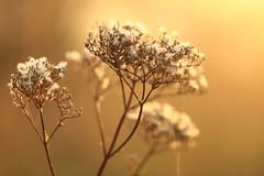 IMG_7197 Dawn (MariuszWicik) Tags: macro view image canoneos5dmarkii lens polish poland polska dawn morning