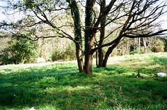 Yes!! (Matthew Paul Argall) Tags: canonsnappy20 fixedfocus 35mmfilm kodakultramax400 ultramax 400isofilm kodak400 trees plants weeds snapshot yes