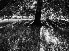 rnor80692.jpg (Robert Norbury) Tags: fuckit somearelandscapessomearenot icantbearsedkeywording fineartphotography blackandwhite photographer itdoesntmatterwhattheyarepicturesoftheyarejustpictures itdoesntmatterwhattheyarepicturesoftheyarejustpictur