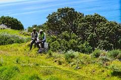 Deux otoctones au Cap (Deb' Alexandra Rougeux) Tags: nature lecap afriquedusud panorama