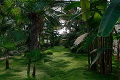 The Green Mile (picsessionphotoarts) Tags: afsnikkor28300mmf3556gedvr nikon nikond750 nikonfotografie nikonphotography zoo atthezoo wilhelma stuttgart wilhelmastuttgart botanischergarten pflanzen plants green grün gewächshaus palmen palms glasshouse tropical