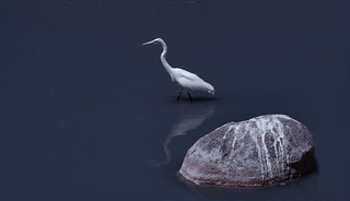 Egret Reflection - Infrared