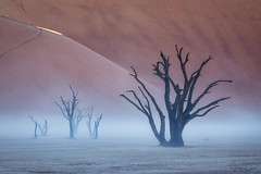 Spotlight (Hilton Chen) Tags: rainstorm waterstreaks namibdesert sunrise landscape scale foggy namibia sanddunes camelthorntrees deadvlei people spotlight misty sossusvlei namibnaukluftnationalpark hardapregion na