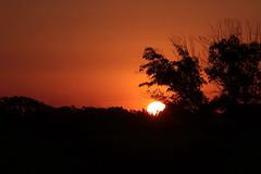 Atardecer en el campo (Ce Rey) Tags: siluetas silhouettes atardecer naranja puestadesol paisaje landscape countryside campo nature naturaleza sol sun arboles trees