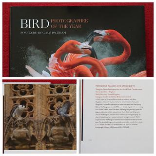 Bird POTY 2018