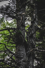 DSC_0097 (Hilðr) Tags: mountains trees rocks forest woods view horizon canyon hills pine stones moss norse inspiration spirit hiking dark
