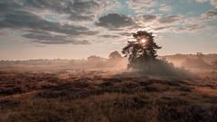 Sonnenaufgang in der Heide (stevepe81) Tags: alpha6300 sigma16mm14 landscape landschaft nature sonycamera outdoor westruperheide landscapephotography haltern münsterland sonyalpha sunflare heide nebel sunrise foggy sonnenstern sonyalpha6300 lightroom natur
