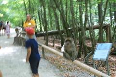 IMG_8651 (harleyhurricane1) Tags: monkeys handfeedmonkeys feedmonkeyspopcorn affenbergsalem barbarymacaques storks deer badenwurttemberg germany