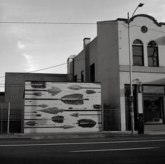 Portland (austin granger) Tags: portland oregon mural blainefontana arrows correspondence lines nativeamerican street sidewalk square film gf670