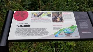 Carmack Woods Wetlands