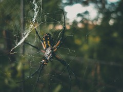 Spooky (iamerinclouse) Tags: leicaworld leicagram leicacam leicaphotography leica bokehphotography bokeh spiderwebs spiderweb spiders spider moody kansascityphotographer kansascity lookslikefilm lightphotography aesthetics visualsoflife earth visualsofearth visuals outdoors naturephotography nature