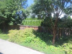 IMG_8361 (Andy E. Nystrom) Tags: bellevue washington wa bellevuewashington