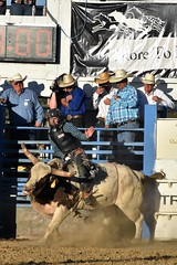 "Baker County Tourism – basecampbaker.com 47150 (Base Camp Baker) Tags: oregon ""easternoregon"" ""bakercountytourism"" basecampbaker ""basecampbaker"" ""bakercounty"" rodeo cowboys ""bakercitybroncandbullriding"" ""bakercity"" ""oregonrodeo"" ""minersjubilee"" oregonrodeo ramrodeo traveloregon travel tourism roughstock rodeolife bulls bullriding"