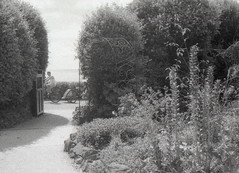 Summer In A Garden - Bournemouth (Balticson) Tags: garden flowers plants summer cyclist bicycle trailer blackwhite bournemouth russellcoteshouse filmphotography ilforddelta3200 fastfilm