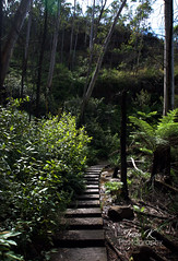 Stepping Stones Among the Trees (tessa.kyren) Tags: blue mountains trees landscape clouds australia nsw australian green greenery nature ranges trek fine art photo print