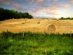 The field 6 (mrbillt6) Tags: landscape rural prairie field straw bales grass trees outdoors country countryside northdakota