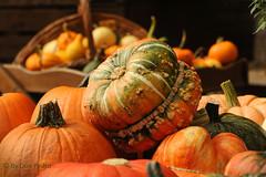 de-herfst-is-weer-begonnen (Don Pedro de Carrion de los Condes !) Tags: donpedro d700 herfst herbst autumn automne pumpkin pompoen kalebas sierkalebas mand oogst seizoen kleurig boerderij nijkerk