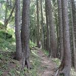 Forest near Lac Retaud thumbnail