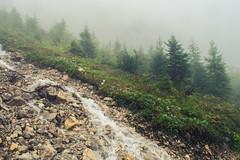 Torrent in the Alps (Netsrak) Tags: alpen alps baum berg bäume eu europa europe landschaft natur nebel wald fog landscape mist mountain nature woods oberstdorf nebelhorn