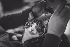 We're having a moment (Tracey Rennie) Tags: lap loveshisdaddy theboss stelios cat senior 16 monochrome toothless littledoglaughednoiret