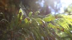 reference-161 (TLCStudentReferences) Tags: helenastackhouse leaves newzealand tree texture bokeh web lichen moss nz flowers