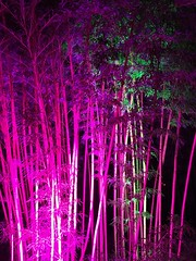 Pink Bamboo - Parknächte III (christophbieniek (Thank you for 1 million views!)) Tags: bambus bamboo parknächte 2018 schloss dyck castle schlossdyck lichtfestival ikigai japanischer garten japanese garden iphone