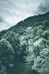 Olla de San Vicente V (Álvaro Hurtado) Tags: nikon d7200 sigma naturaleza nature paisaje landscape asturias españa spain oviedo monte mount montaña mountain río river dobra picos europa niebla fog mist árboles trees agua water nubes clouds