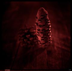 whispering cone (*altglas*) Tags: mediumformat mittelformat 6x6 120 film analog expired expiredfilm orwo orwonp27 monochrome zeiss superikonta contameter pinecone banksia red