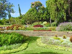Santa Catarina Park, Funchal (Linda 2409) Tags: garden park flowers border