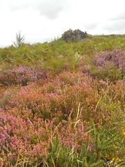 DSCN5700 (norwin_galdiar) Tags: bretagne brittany breizh finistere monts darrée nature landscape paysage