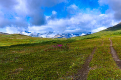 Travels along an old mining road (janefenya1313) Tags: north northern hiking adventure outside wild landscape beauty beautiful serene yukon alpine scenery vista vast green fresh hike botany botanical flower flowers flora fireweed pink mountains mountain sky