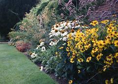 Garden (sam.naylor) Tags: kew gardens london uk garden park royal botanical fuji portra vc medium format film rangefinder 645 gs645s