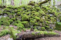 (jochenhaesler) Tags: moos landscape sirui sony sonyalpha sonyalpha7m2 ilce7m2 alpha7m2 steine stone wald forrest natur nature langzeitbelichtung longexposure