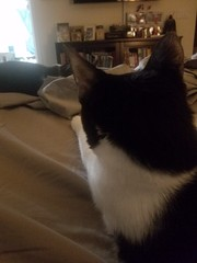20180807_063922 (sobca) Tags: cat kottur kitte eesa miu kat pussi kato chat katze popoki gatto chatool billi felis cattus gato katt meo кошка बिल्ली 猫 γάτα vighro ᏪᏌחתול