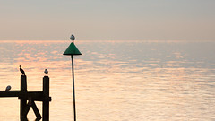 Waiting (Future-Echoes) Tags: 4star 2016 birds bokeh coast depthoffield dof essex morning sea seagull southendonsea waiting water