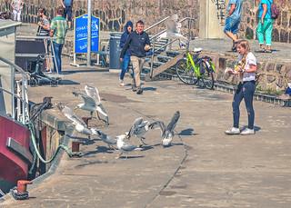 BIRDS ! (attack)