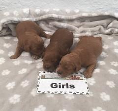 Allie Girls 9-1